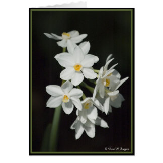Narciso de Paperwhite Cartoes