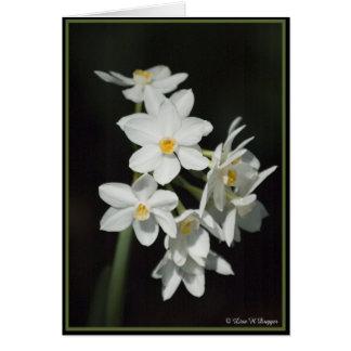 Narciso de Paperwhite Cartão Comemorativo