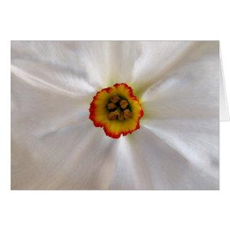 narciso do branco da pérola cartão comemorativo