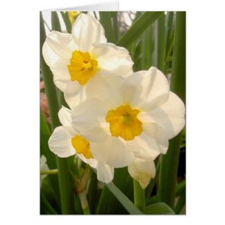 Narciso do primavera cartão comemorativo