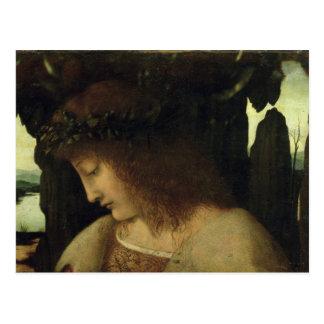 Narciso na fonte cartão postal