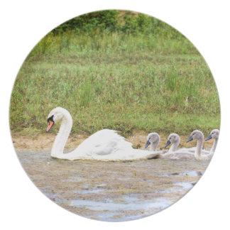 Natação branca da cisne da mãe na linha dos pratos de festas