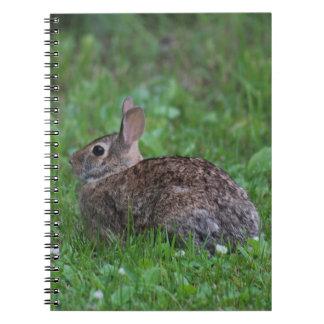 Natureza Cadernos Espiral