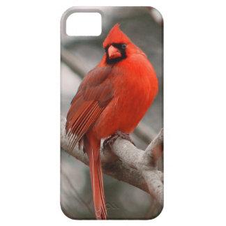 Natureza Capa Para iPhone 5