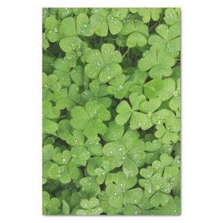 Natureza do verde do lenço de papel do trevo