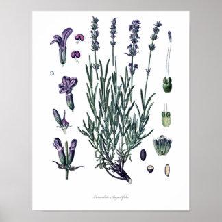 Natureza, impressão botânico, arte da flor da