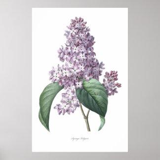 Natureza, impressão botânico, arte da flor do