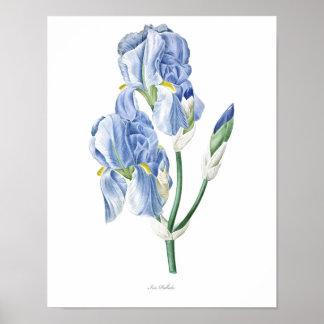 Natureza, impressão botânico, poster da arte da