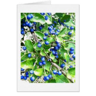 Neve no cartão do feriado das bagas de safira