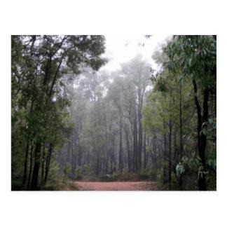 Névoa & eucaliptos cartão postal