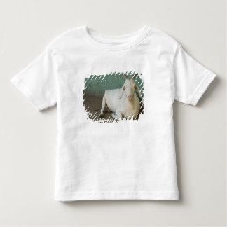 Nicarágua, Granada. Cabra que descansa no patamar Camiseta Infantil