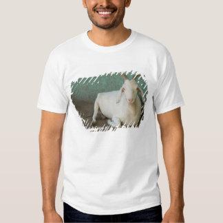Nicarágua, Granada. Cabra que descansa no patamar Tshirts