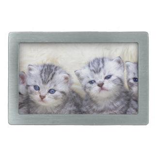 Ninho com os quatro gatos de gato malhado novos em