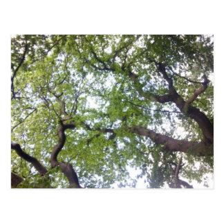 No cartão da foto do dossel de árvore