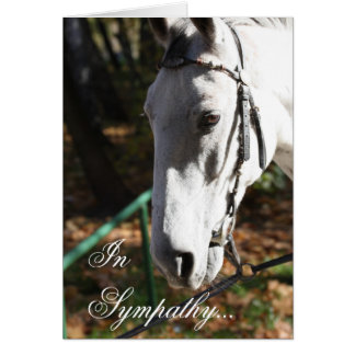 No cartão do cavalo branco da simpatia