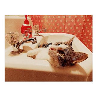 No cartão do gatinho do dissipador