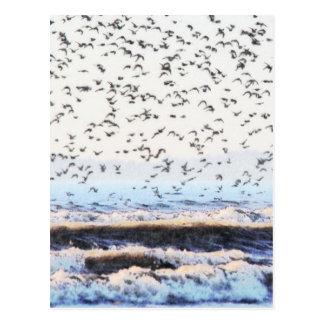 Nó no litoral cartão postal