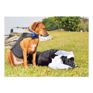 Noiva noivo tímidos do cão da noiva convite personalizados