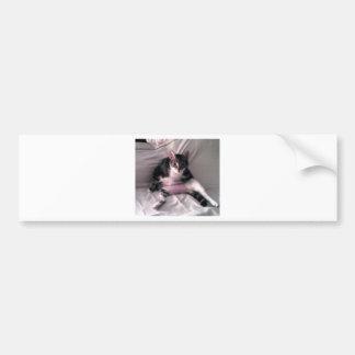 Normando o gato adesivo para carro