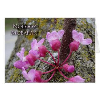 Norooz, árvore de Redbud na flor, fotografia do Cartão