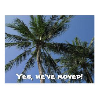 Nós movemo-nos - palmeiras no cartão