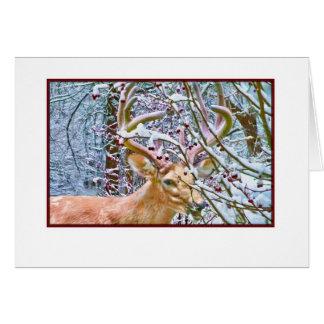 Nota ou cartão com as maçãs dos cervos e de