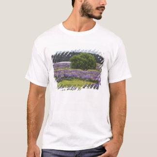 Nova Zelândia, ilha sul. Lupine de florescência e Camiseta