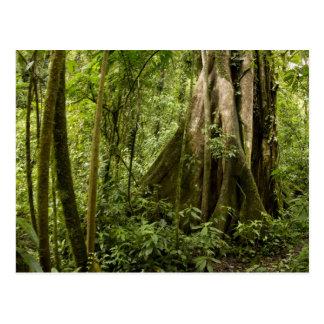 Nuble-se a floresta, Bosque de Paz, Costa Rica Cartão Postal