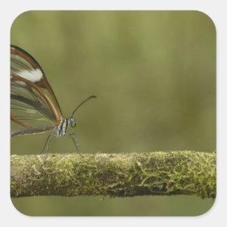 nuvem Claro-voada do sp de Hyalurga da borboleta?) Adesivo Em Forma Quadrada