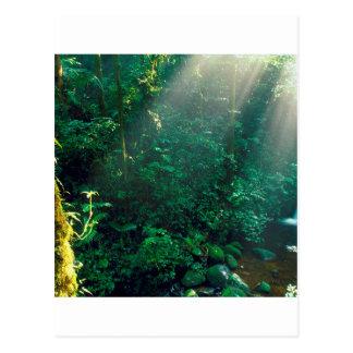 Nuvem Costa Rica de Monteverde da floresta Cartões Postais
