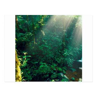 Nuvem Costa Rica de Monteverde da floresta Cartão Postal
