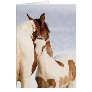 Nuzzle o cartão do cavalo selvagem