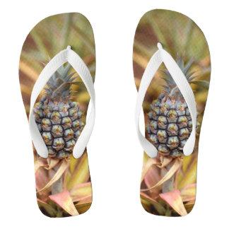 O abacaxi de meus chinelos do olho