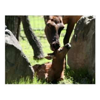 O alce da mãe beija o cartão do bebê