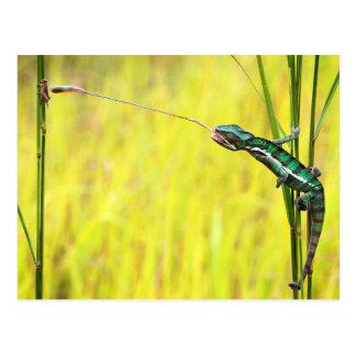 O almoço de um lagarto cartão postal