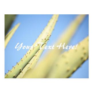 O aloés verde pálido planta o cartão do céu azul