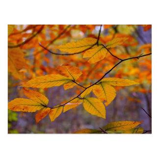 O amarelo do outono deixa o cartão