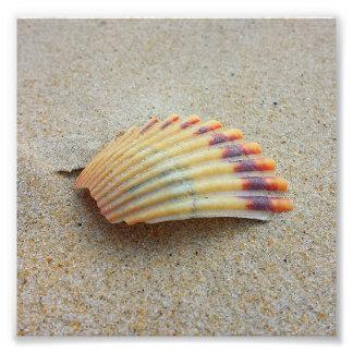 O arco-íris Shell remenda Impressão De Foto