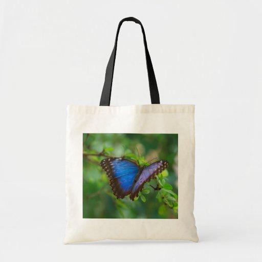 O bolsa azul da borboleta