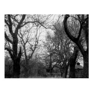 O bosque no inverno - cartão