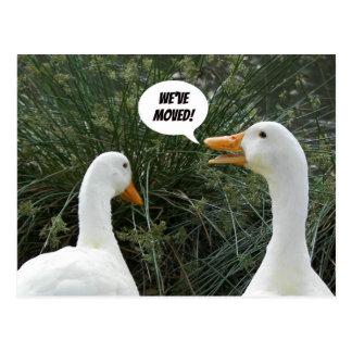 O branco Ducks a mudança da foto de endereço Cartão Postal