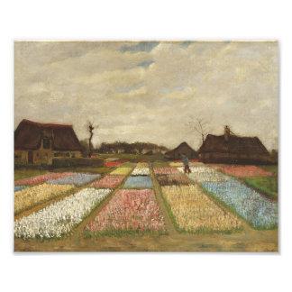 O bulbo de Vincent van Gogh coloca a arte floral Impressão De Foto