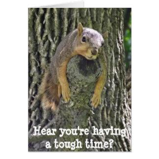 O cair dentro lá, obtem o cartão bom, esquilo