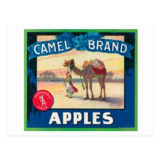 O camelo Apple etiqueta - o estado de Washington Cartão Postal