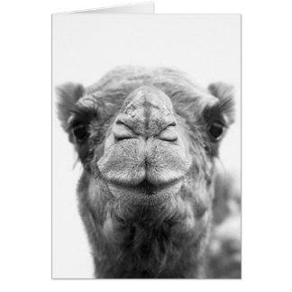 O camelo beija cartões da foto do close up do
