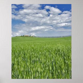 O campo e a movimentação de trigo alinharam pelo c posteres
