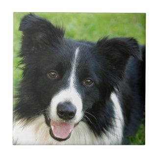 O cão de border collie adiciona o animal de estima azulejos