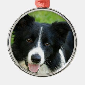O cão de border collie adiciona o animal de estima ornamentos