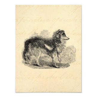 O cão de pastor dos 1800s do vintage - cães de car impressão de foto