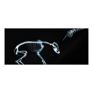 O cão mau azul dos esqueletos do raio X convida Convite 10.16 X 23.49cm